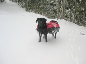 Boone Dawg